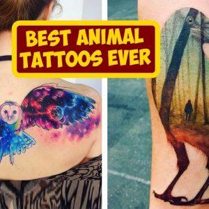 Best Animal Tattoos Ever