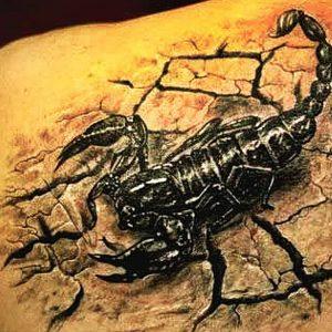 Zodiac Signs Tattoos: Scorpio